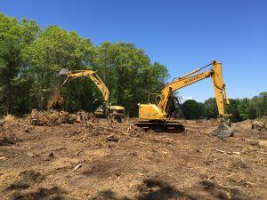 Tree Stump Removal